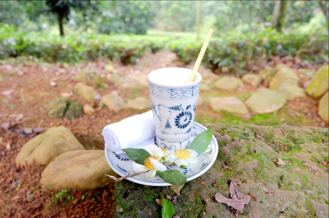 Havesting-tea (2)